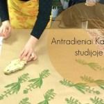 Kūrybingi antradieniai su lietuviškais augalais atviroje Kaupolės studijoje
