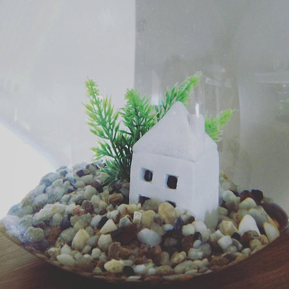 akvariumams