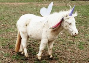 drama-pony