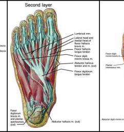 diagram of big toe pain [ 1547 x 790 Pixel ]