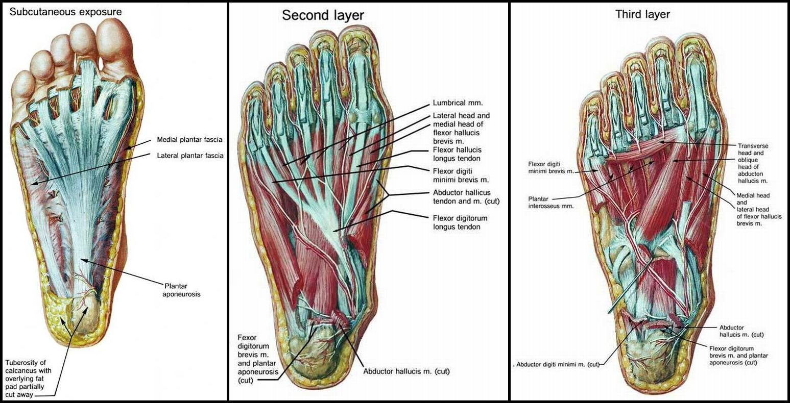 hight resolution of side foot pain diagram
