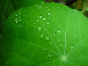 Dew on a leaf