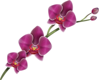 Orchid Stickers Satu Sticker