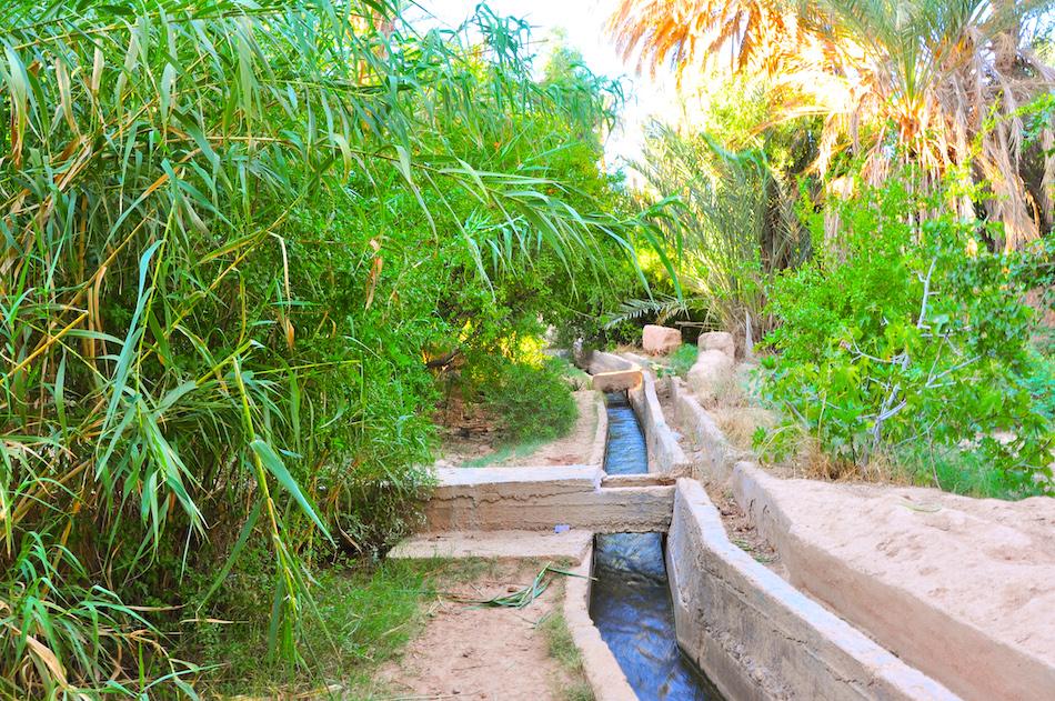 Palmiers et irrigation Tata Maroc