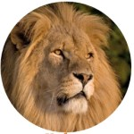 Tenterden Lions are at The Big Cat Sanctuary from 20th – 23rd July