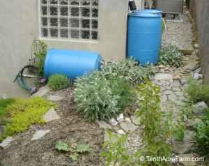 """Erfahren Sie, wie Sie einen Regengarten bauen, in dem Regenwasser von harten Oberflächen wie Dächern oder Gehsteigen zur Bewässerung oder zur Verringerung der Wasserverschmutzung abfließt. """"Width ="""" 800 """"height ="""" 634 """"srcset ="""" https: // www. tenthacrefarm.com/wp-content/uploads/2011-DSC06421-800x634.jpg 800 W, https://www.tenthacrefarm.com/wp-content/uploads/2011-DSC06421-1024x811.jpg 1024 W, https: // www. tenthacrefarm.com/wp-content/uploads/2011-DSC06421-300x238.jpg 300w, https://www.tenthacrefarm.com/wp-content/uploads/2011-DSC06421-768x609.jpg 768w, https: // www. tenthacrefarm.com/wp-content/uploads/2011-DSC06421-1536x1217.jpg 1536w, https://www.tenthacrefarm.com/wp-content/uploads/2011-DSC06421.jpg 1292w """"sizes ="""" (max-width: 800px) 100vw, 800px"""