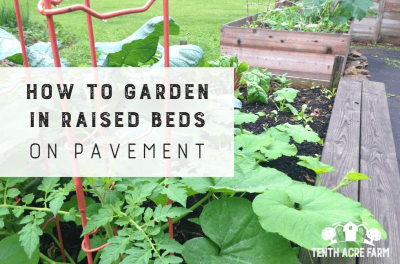 Hochbeete auf Bürgersteigen sind eine Strategie für Gärtner mit begrenztem Anbauflächen. Erfahren Sie, wie Sie Lebensmittel auf gepflasterten Oberflächen wie Beton oder Asphalt anbauen.