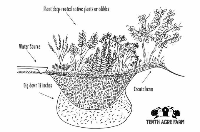 """Erfahren Sie, wie Sie einen Regengarten bauen, in dem Regenwasser von harten Oberflächen wie Dächern oder Gehsteigen zur Bewässerung oder zur Verringerung der Wasserverschmutzung abfließt. """"Width ="""" 680 """"height ="""" 450 """"srcset ="""" https: // www. tenthacrefarm.com/wp-content/uploads/Rain-Garden-illustration.png 680w, https://www.tenthacrefarm.com/wp-content/uploads/Rain-Garden-illustration-300x199.png 300w """"sizes ="""" ( Max-Breite: 680px) 100vw, 680px"""
