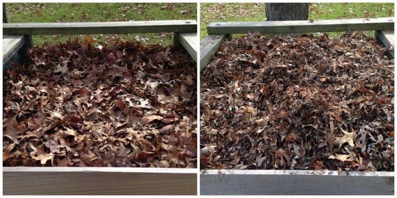 Shredded Leaf Mulch