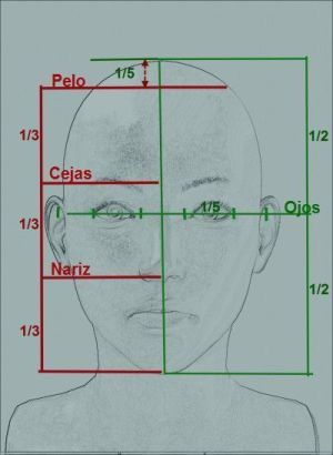 Proporciones Busto Tenttoi