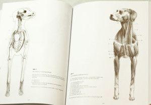 Foto_Innenseite_5157_Anatomische-Zeichenschule-Tier_d_17