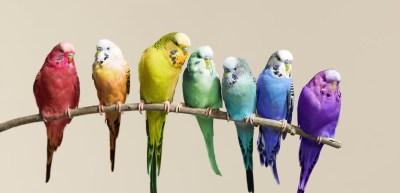 109393787_birds