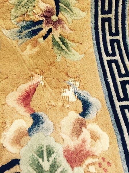 Motten Im Teppich motten im teppich mottenbefall beseitigen amir teppiche motten im teppich