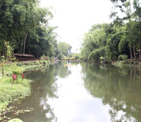 menilik-arboretum-bambu-di-boonpring-andeman