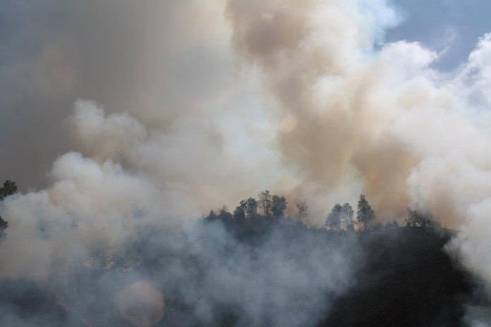 ada-kerugian-ekologis-dari-kebakaran-di-lereng-gunung-semeru