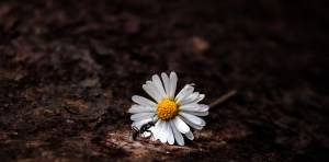 ossessioni d'amore terapia breve strategica