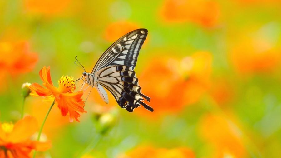 Farfalle Terapia della bellezza Consulenza di Immagine Roma corso Personal Shopper e Consulente di Immagine Roma 01