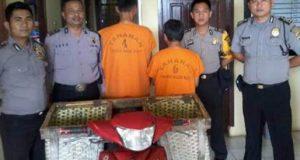 Dua pelaku pencurian spesialis ternak sapi, Zalyadi dan Nazili diamankan Polsek Balik Bukit, Lampung Barat bersama barang bukti. (Foto; Humas Polres Lambar)