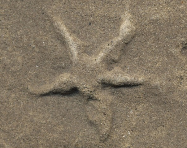 scan-fossil-ecu