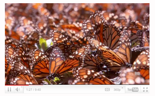 2,000 Mile Journey of the Butterflies