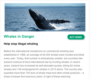 Help stop illegal whaling