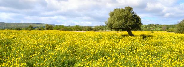 Stockage du carbone dans les sols: un bel objectif mais beaucoup d'incertitudes