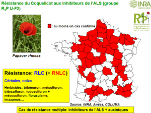 resistance_coquelicot.png