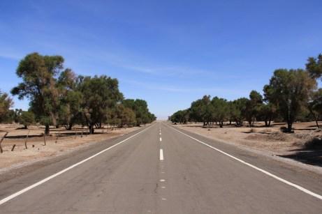 Árvores mudam o cenário do deserto
