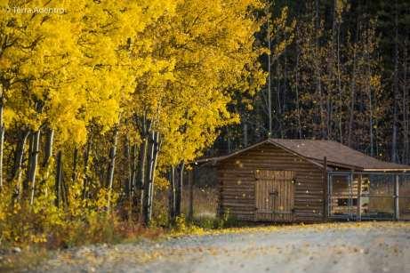 As folhas caindo em uma tarde de outono