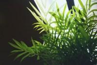Indoor Plants Light RequirementsTerraCast Products