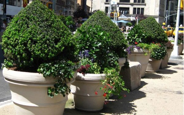 tree pots successfully
