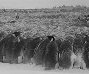 https://i0.wp.com/www.terradaily.com/images/penguin-blizzard-incubating-bg.jpg?resize=300%2C250