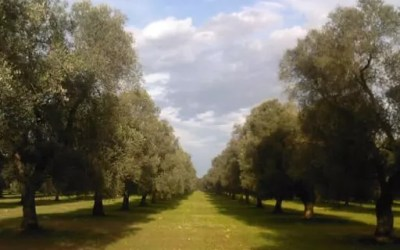 Azienda agricola Samali