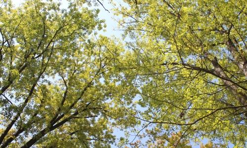 nuove foglie nel bosco