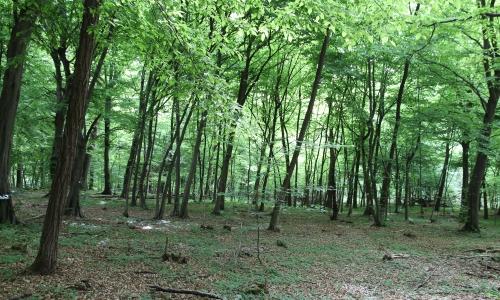 bosco della partecipanza trino