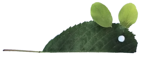 topolino di foglie