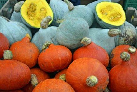 A financer : le sauvetage de notre biodiversité alimentaire