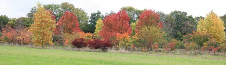 Autumn colour at Hillier nursery, Liss