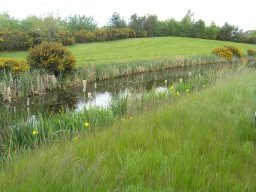 SUDS scheme and self-seeded Gorse at NATS