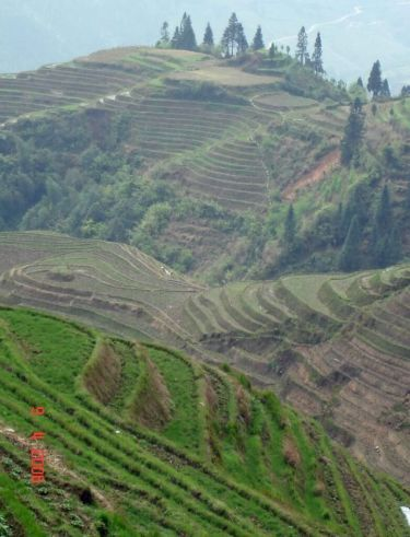 Dragons-Backbone-Rice-Terraces Longsheng China