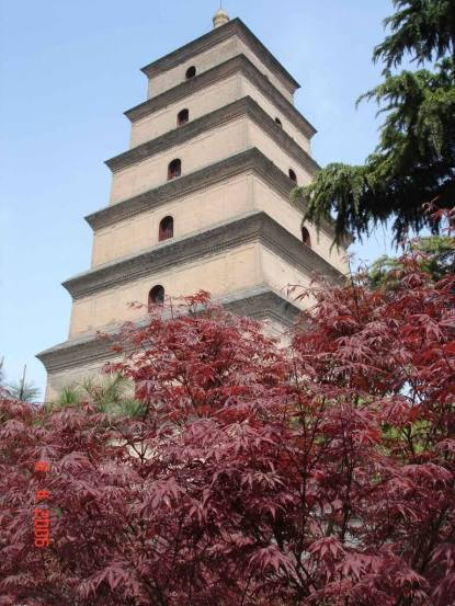Xian Big Wild-Goose-Pagoda-and-Maple tree in Da Ci'en Temple grounds