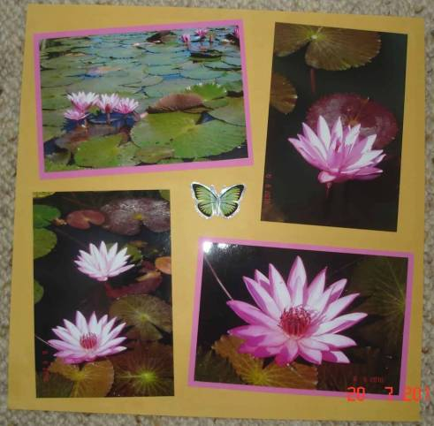 Scrapbooking design layout for waterlilies on the pond Anderson Park Townsville City
