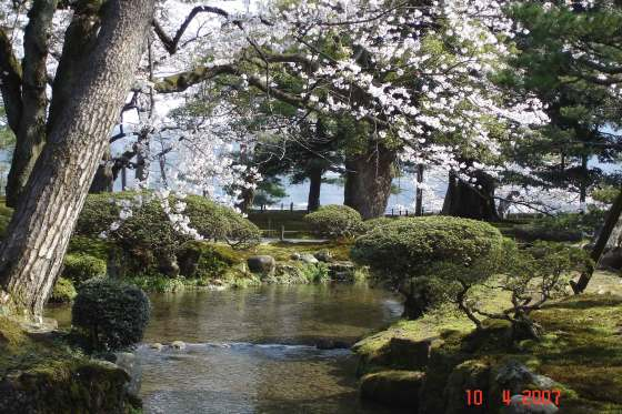Kenroku-en Pond views and cherry blossoms