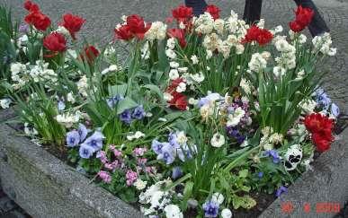 flowerBedsPromenadeRed3
