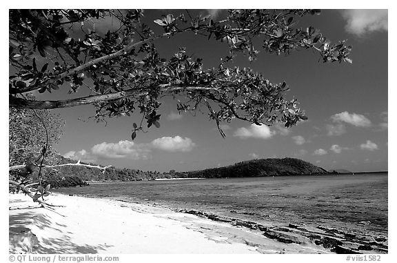 Beach on Hawksnest Bay. Virgin Islands National Park (black and white)