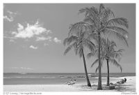Black and White Picture/Photo: Couple on beach chair, and ...