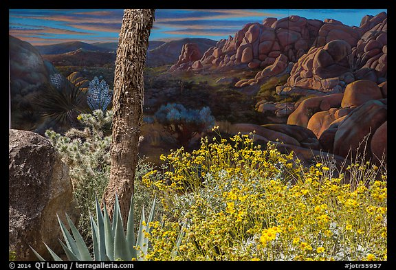 PicturePhoto Flowers and mural Joshua Tree National Park