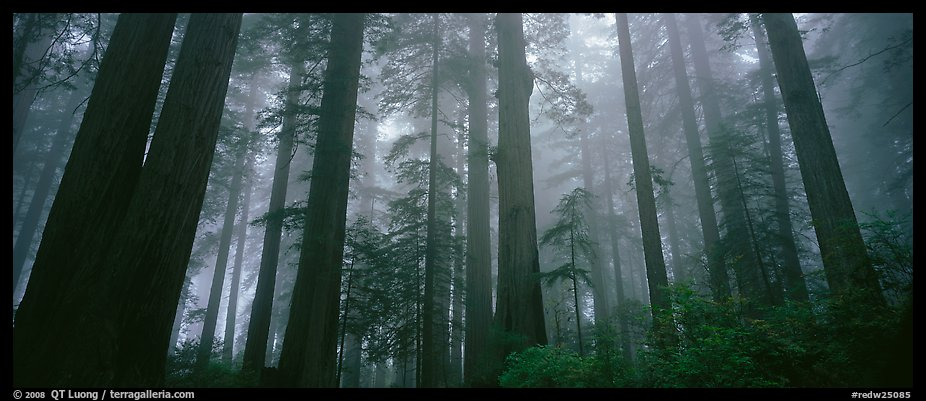 Fall Mist Wallpaper Panoramic Picture Photo Tall Forest In Mist Lady Bird