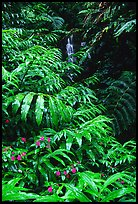 Akaka Falls Wallpaper Akaka Falls State Park Pictures Oceania Stock Photos