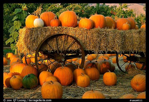 Free Fall Pumpkin Desktop Wallpaper Picture Photo Pumpkin Patch San Jose California Usa
